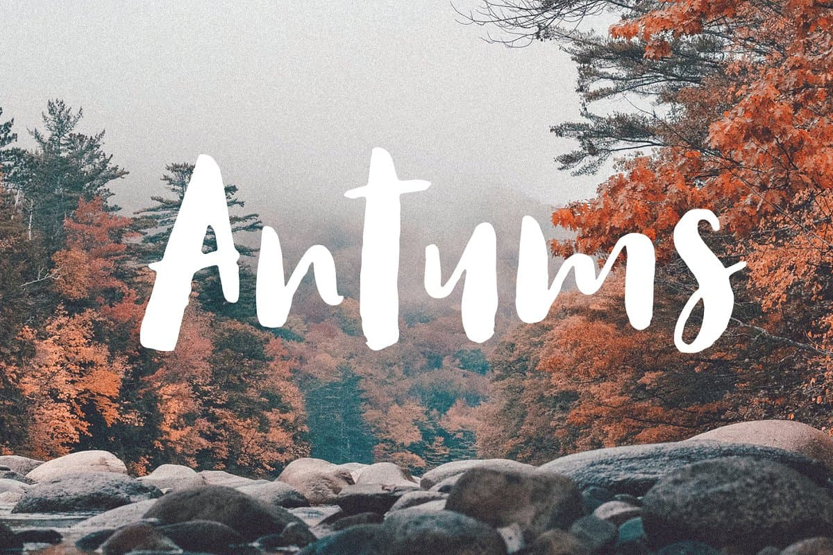 Download Antums font (typeface)