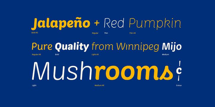 Download Market font (typeface)