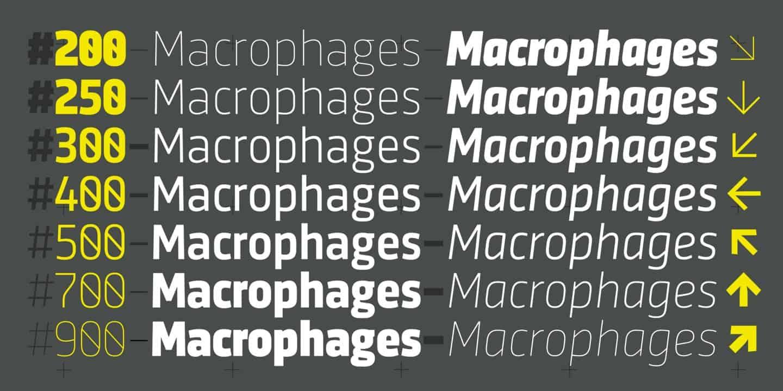Download Sinews Sans Pro font (typeface)