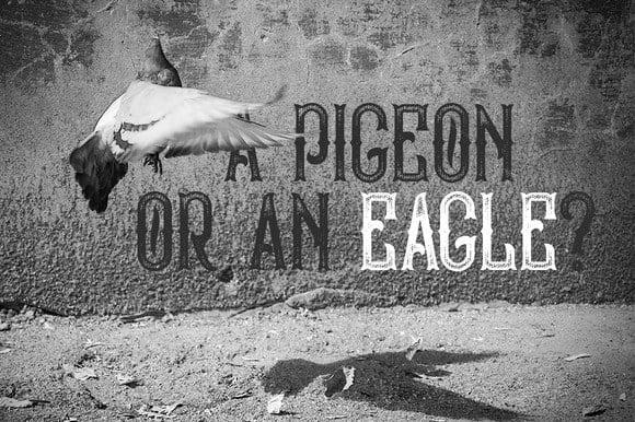 Download Bald Eagle font (typeface)