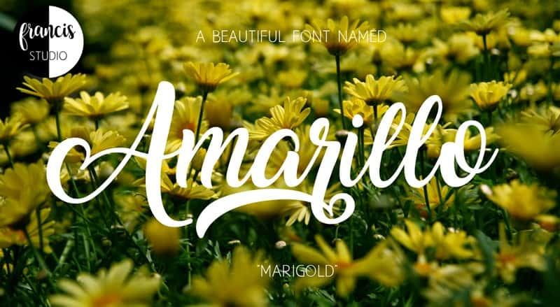 Download Amarill font (typeface)